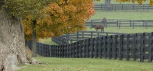 Horse Fence, Fence, Fence Installer, Fence Contractor, NC | SC